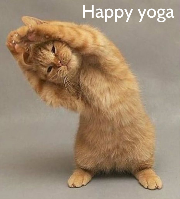 yoga day funny image wallpaper