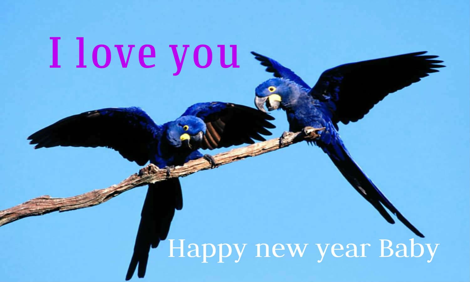 Lovely couple bird happy new year 2016 pictures images wallpaper free download