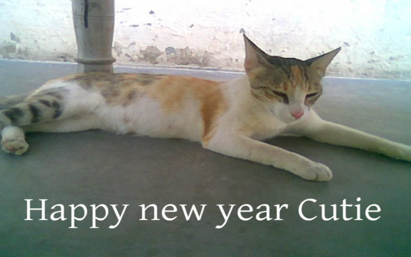 happy new year cutie cat wallpaper free download